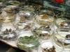 Kröten, Fische, Frösche