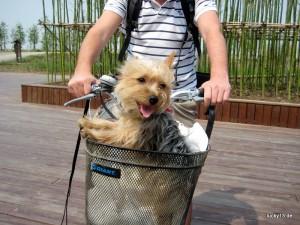 Mit Jimmy auf Chongming Island im Mündungsdelta des Yangtse